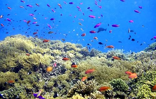 25 Tempat Wisata Di Manado Yang Wajib Dikunjungi Tempatwisataunik Com