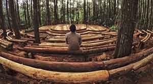 Hutan Pinus Dlingo