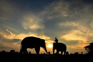 Wisata Taman Nasional Way Kambas yang Wajib Dikunjungi