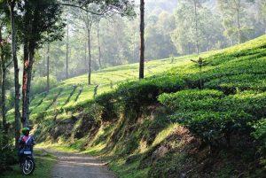 Wisata Alam Jabodetabek Paling Terbaik - agrowisata gunung mas