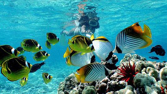 15 Tempat Snorkeling di Bali yang Indah dan Wajib Dicoba
