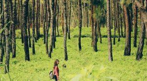 8 Hutan Pinus di Malang dan Sekitarnya yang Indah untuk Berwisata Alam