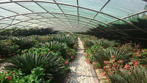 ECO Garden park