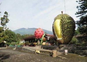 Wisata Warso Farm Bogor yang Wajib Dikunjungi