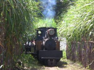 Wisata Agrowisata Sondokoro Karanganyar yang Wajib Dikunjungi