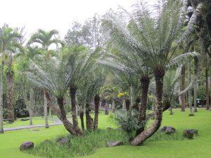 Taman Palem