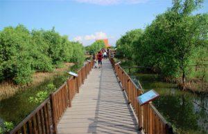 Wisata Hutan Mangrove Wonorejo Surabaya yang Wajib Dikunjungi