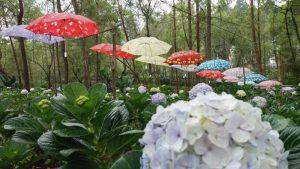 Kebun Bunga