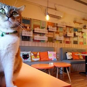 kafe kucing di bintaro