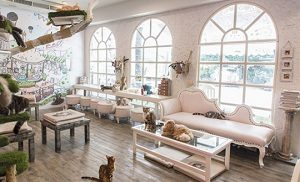 caturday cat cafe