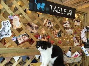 table A Cat
