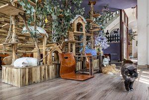 ailu-cat-house