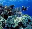 15 Tempat Scuba Diving di Indonesia yang Wajib Dikunjungi