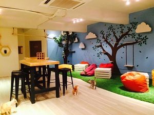 purradise cat cafe