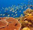 8 Titik Wisata Bahari Bunaken untuk Menikmati Alam Bawah Laut