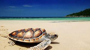 25 Wisata Bahari Banyuwangi yang Indah dan Menawan