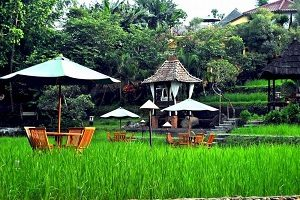 Paddy City Resort