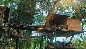 Temega Tree House
