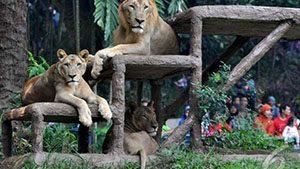 Kebun Binatang Ragunan