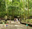 8 Tempat Wisata Hutandi Bali yang Tersembunyi