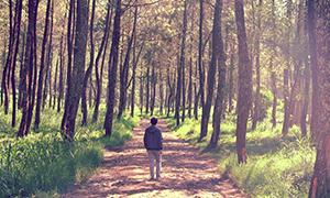 15 Tempat Wisata Hutan di Malang Raya dan Sekitarnya Terfavorit