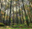 Wisata GunungPancar Sentul Bogor yang Wajib Dikunjungi