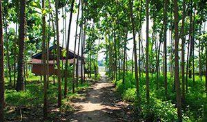 Agrowisata Kali Klatak