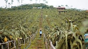 Wisata Agro Jollong Dua