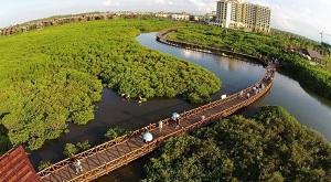 Wisata Mangrove Park Pekalongan
