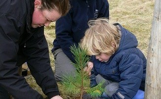 A youngster from Killin Green Team plants a Scots Pine tree on the slope of Ben Lawers