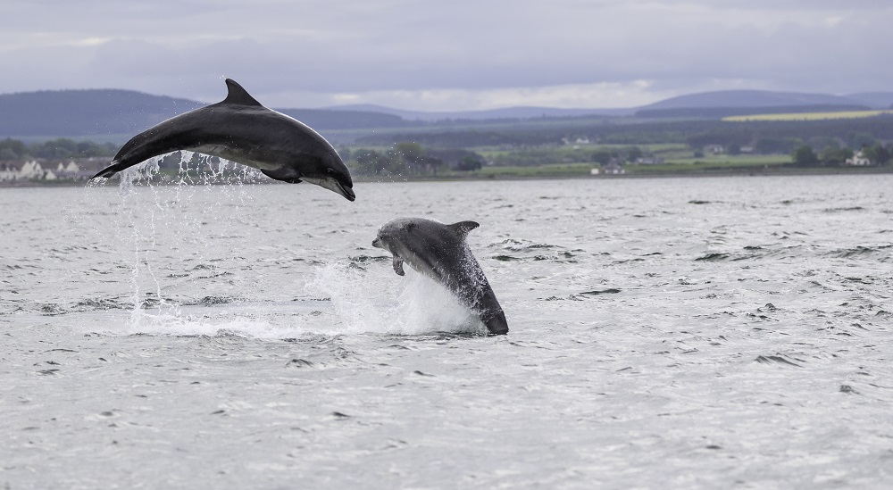 National Whale and Dolphin Watch begins