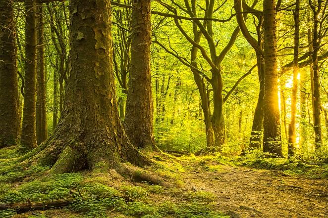 4. Atlantic oak and hazel woods