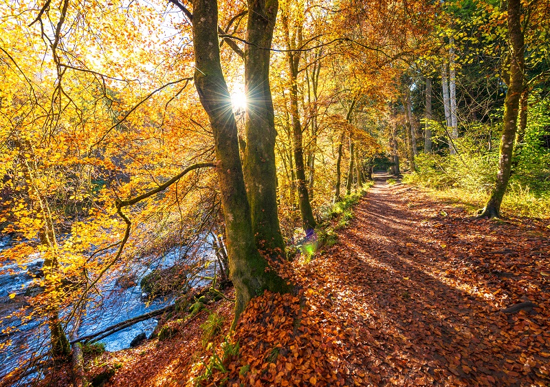 Trust calls for change in Scotland's forests
