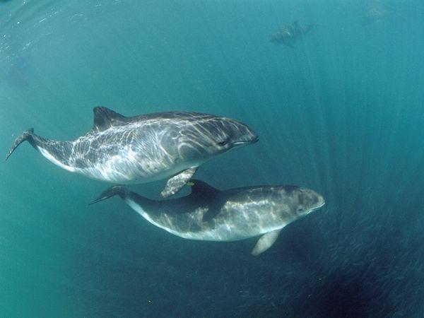 2. Harbour porpoise