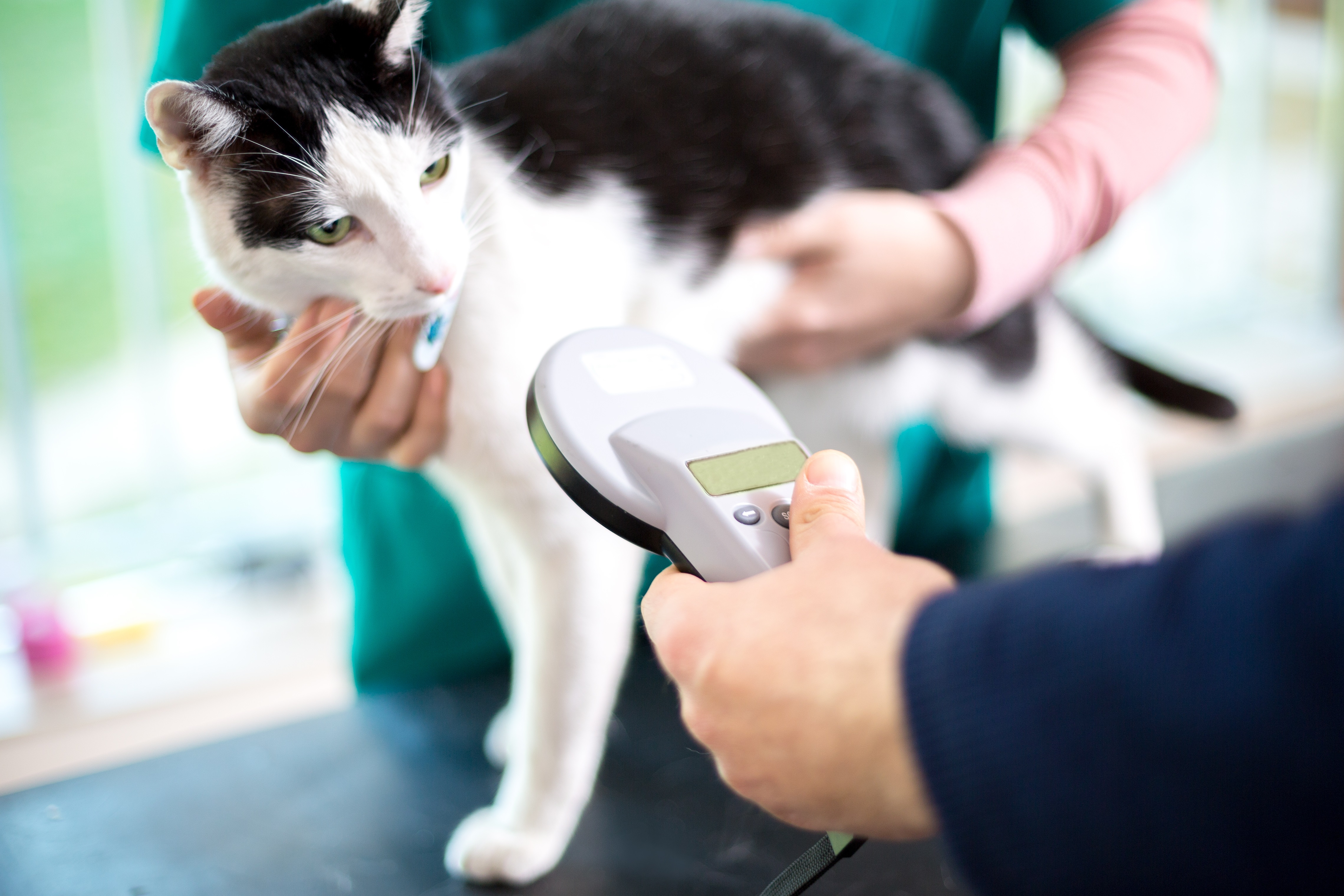 7. Microchip your moggy