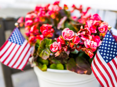 Patriotic potted flowers