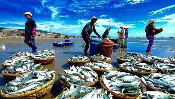 Tham quan mua sắm tại vựa hải sản Hồ Tràm