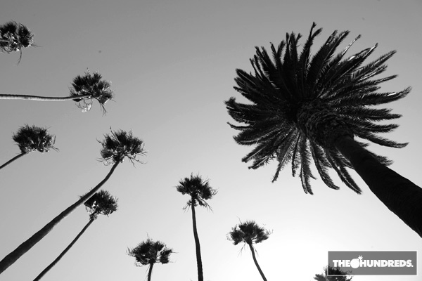 palmtrees_thehundreds1