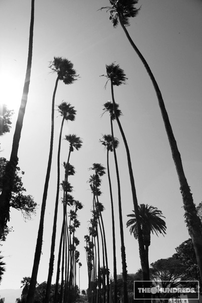 palmtrees_thehundreds3