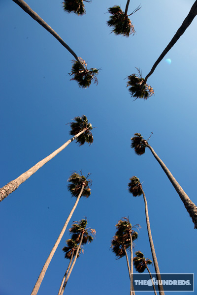 palmtrees_thehundreds4