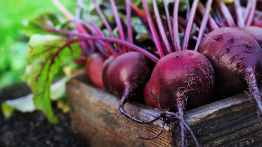 The Beauty of Beetroot