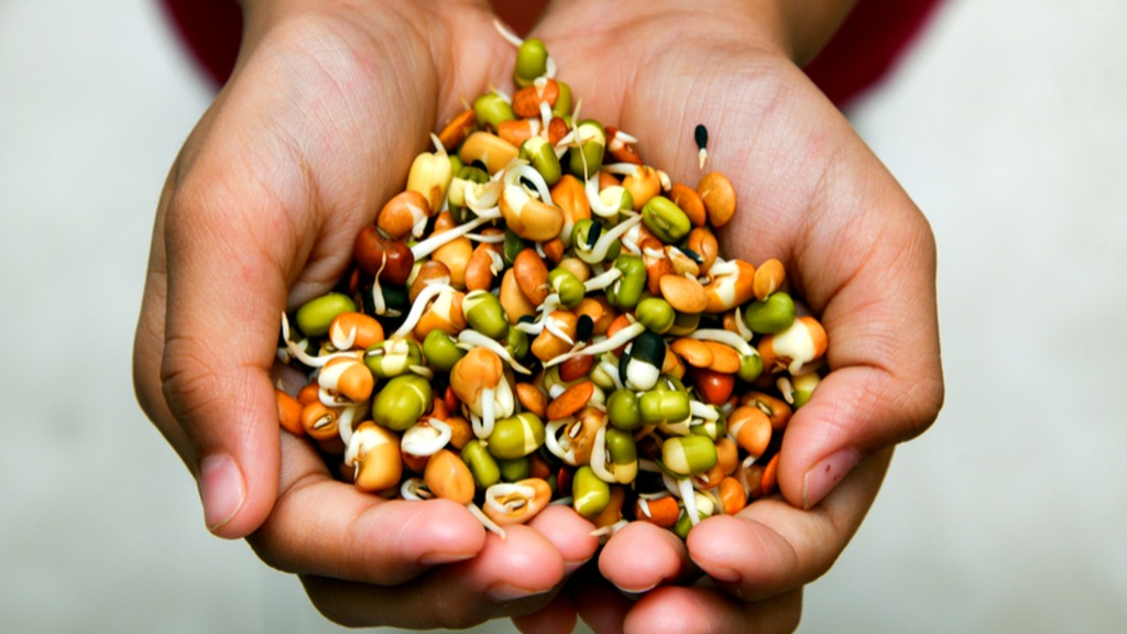 The importance of replacing animal proteins with plant proteins