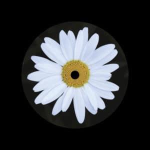 """Kalim Shabazz Joy Dailysession 12"""" Vinyl"""