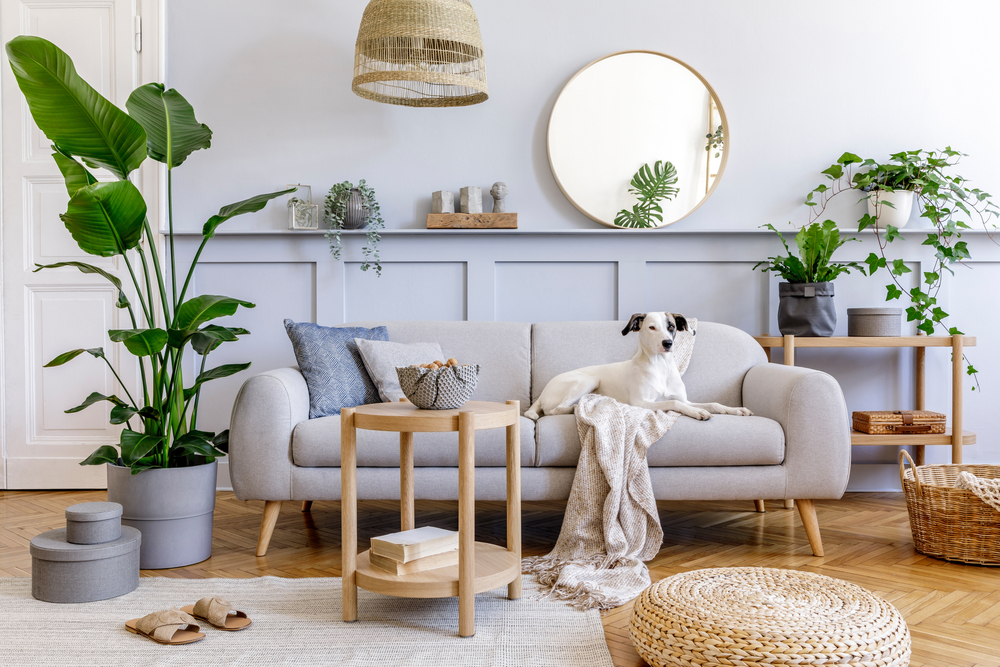 Dog sits on a couch in a modern living room with plants