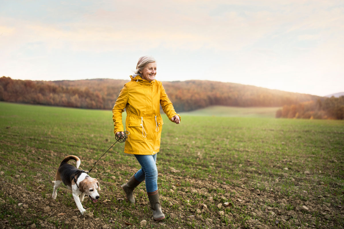 A senior woman wearing a yellow jacket takes her beagle on a walk in a field
