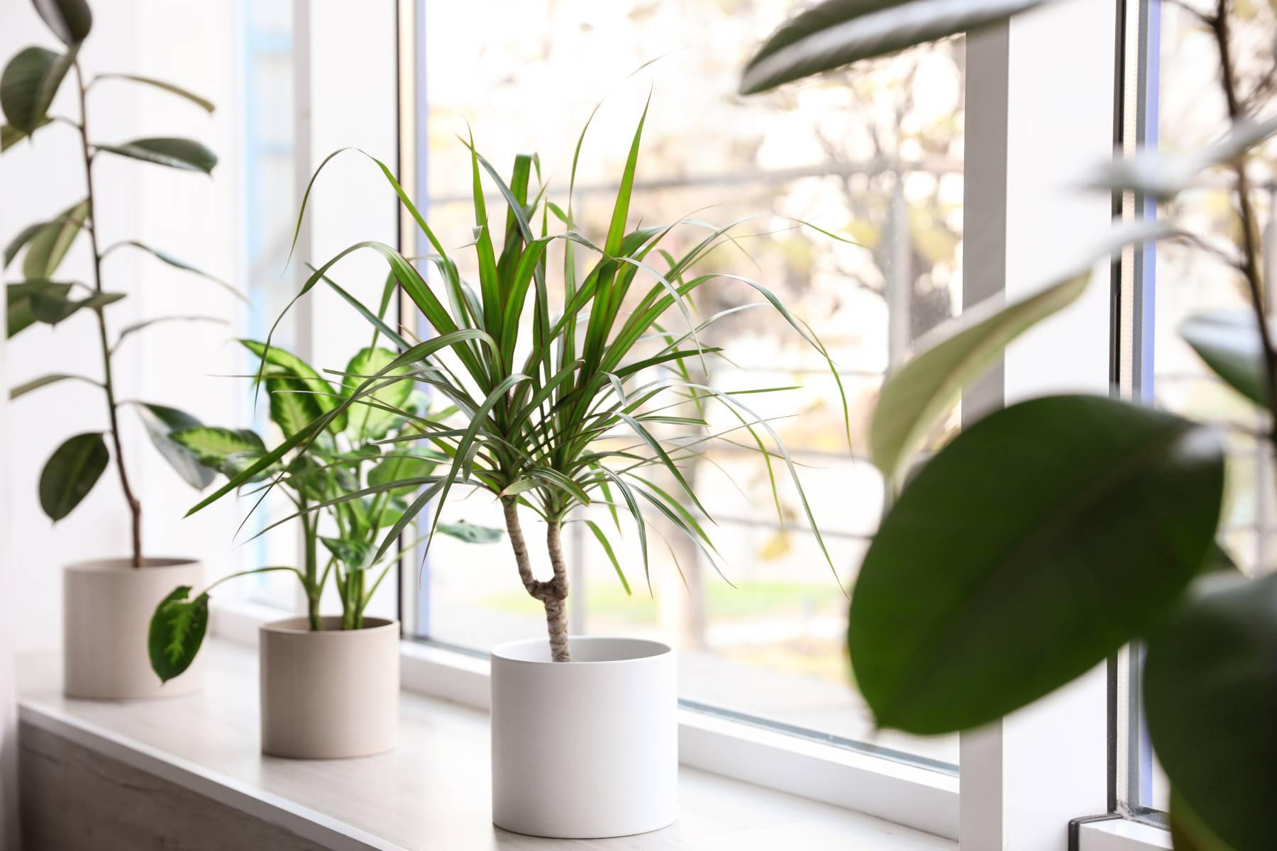 indoor plants in a window of a senior apartment
