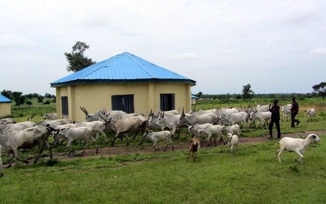 Niger Begins Devt of Bobi Grazing ReserveTHISDAYLIVE
