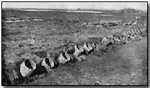 First World War - Weapons of War: Poison Gas