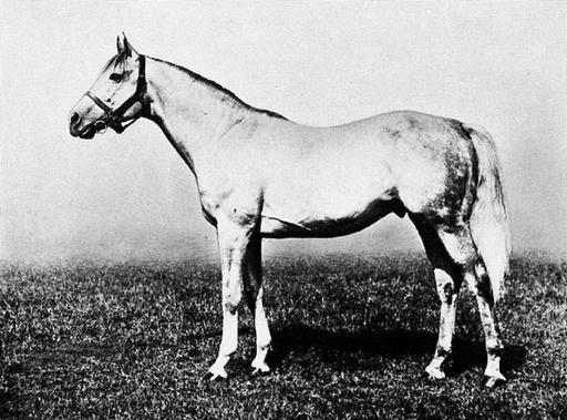 16 Best Le Sancy images | Horse racing, Racehorse, Show horses