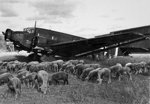 Luftwaffe Junkers Ju 52 transport surrounded by a flock of sheep 01
